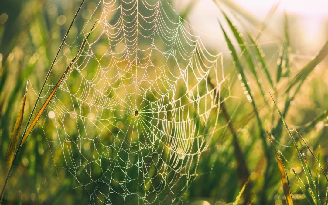 Conheça as espécies de aranhas mais perigosas e saiba como evitá-las