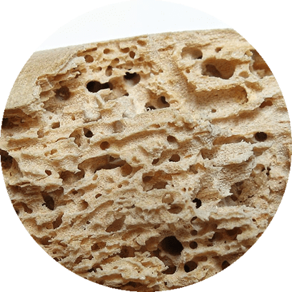 Brocas de Madeira - Controle de Pragas