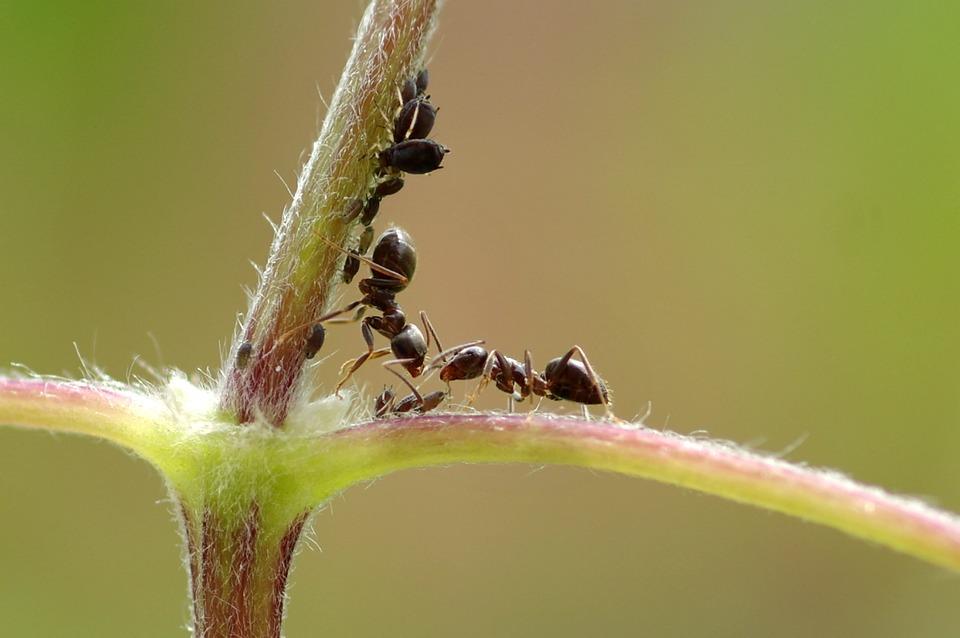 Quer se ver livre de formigas? Conheça os métodos de controle de formigas