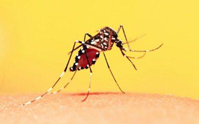 Febre Amarela em Pernambuco: casos confirmados da doença