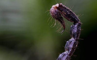 Saiba como se prevenir da infestação de escorpiões