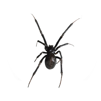 Aranhas - sobre as Aranhas