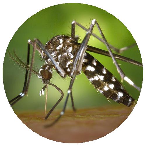 Dedetização de mosquitos em Recife - Pernambuco