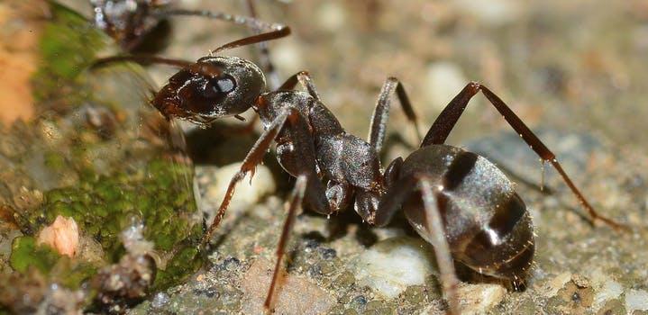 Dedetização de Formigas em Recife