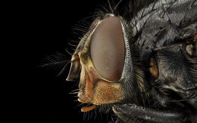 Controle de Moscas em Restaurantes: Você tem um plano para eliminar esses insetos?