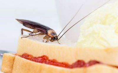 Controle de Pragas em Supermercados: Quais São os Principais Animais Ameaçadores