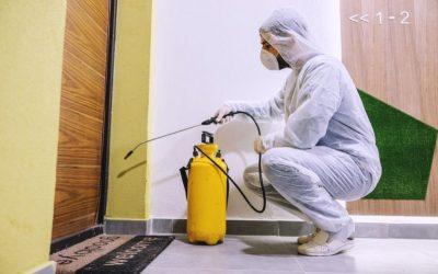 Dedetização de condomínios: como escolher uma controladora de pragas?