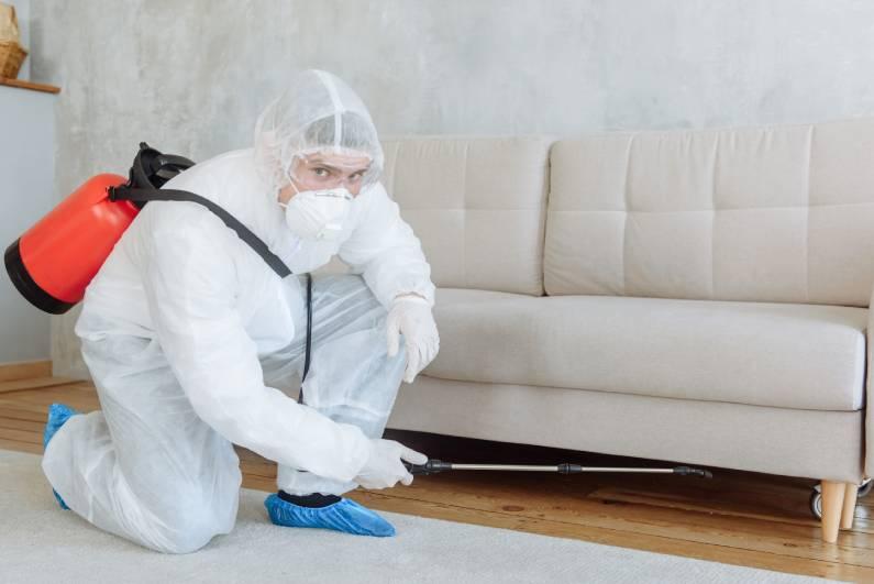 Dedetização de condomínios quais os problemas provocados pelas pragas no local